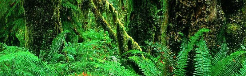 1-landscapes-jungle-forest-woods-ferns-moss-plants-green-background-147607
